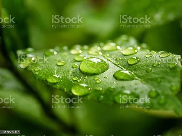 Photo of green leaf