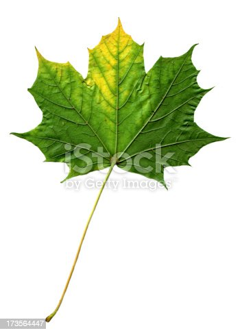 High resolution image of a green leaf.