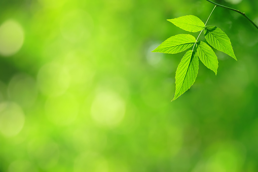 Green Leaf Stock Photo - Download Image Now