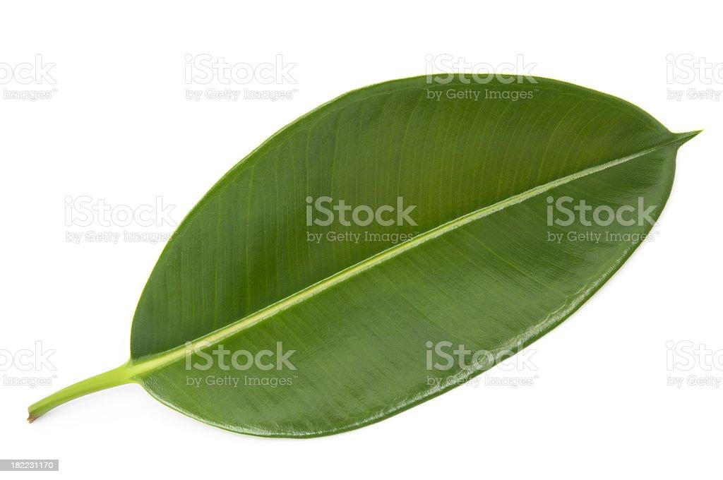Verde leaf - foto de acervo