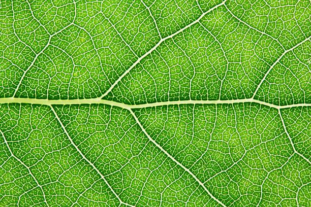 Green feuille - Photo
