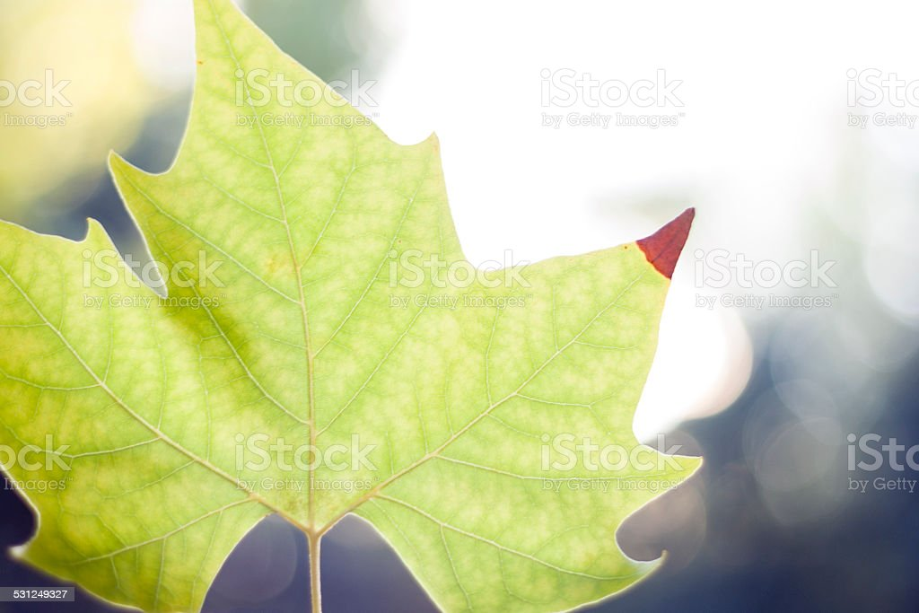 Verde leaf - foto de stock