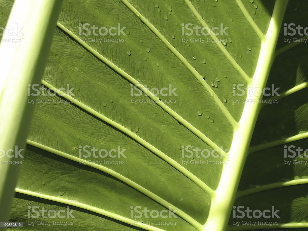Green leaf royalty-free stock photo