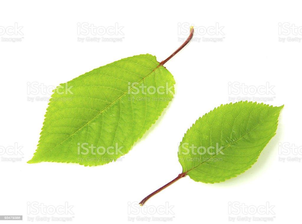 녹색 잎 - 로열티 프리 0명 스톡 사진