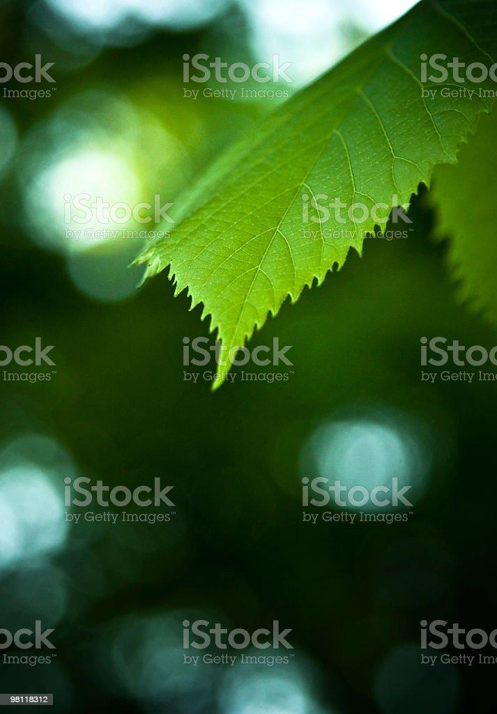 녹색 잎 royalty-free 스톡 사진