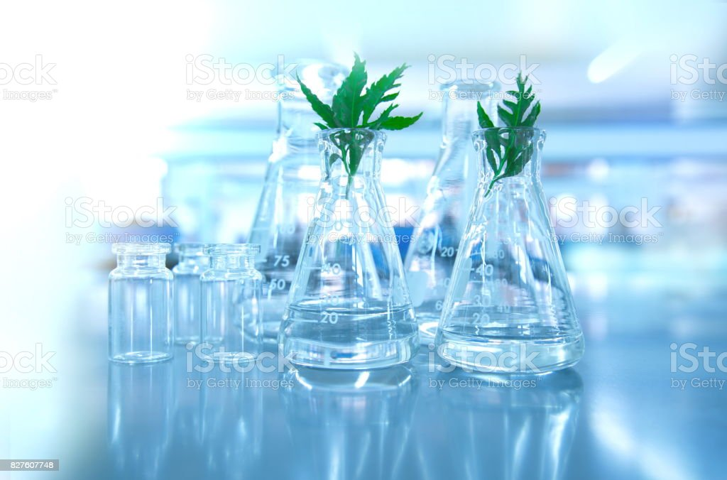 green leaf plant with glassware flask and vial in biotechnology science laboratory background stock photo