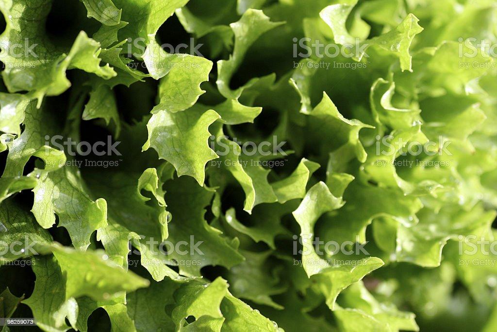 Green leaf salad royalty-free stock photo