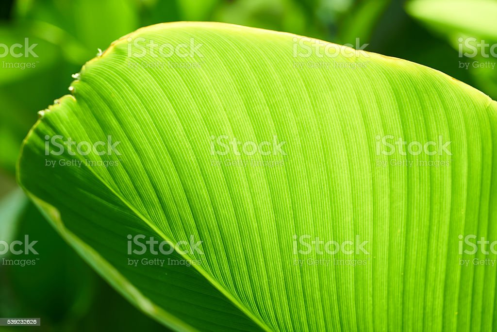 Green leaf selective focus royalty-free stock photo