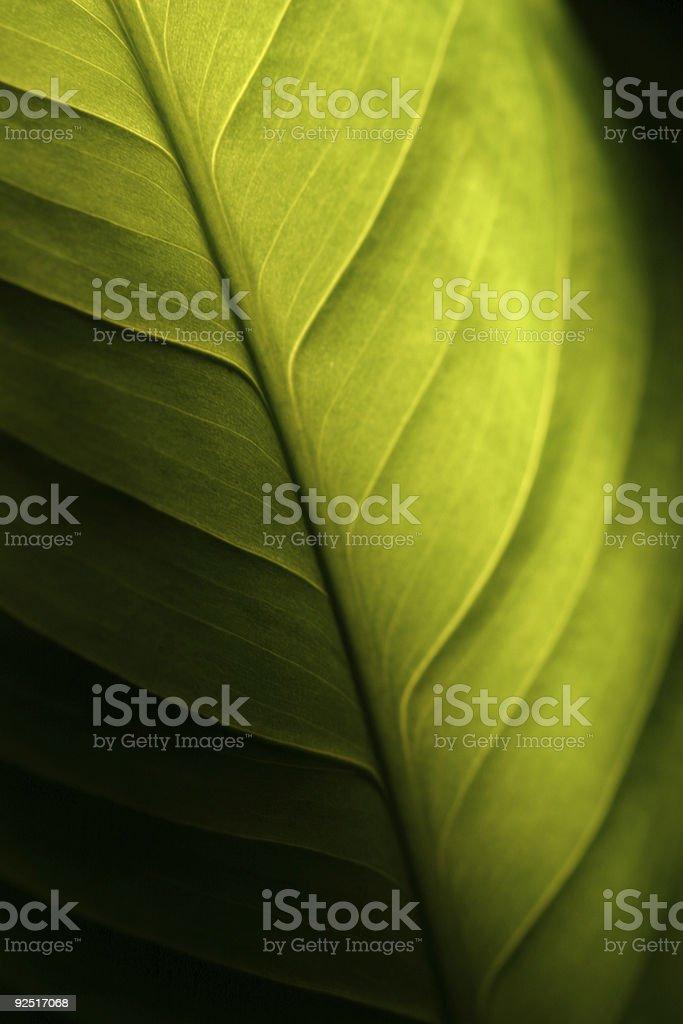 Green Leaf Shadowed royalty-free stock photo