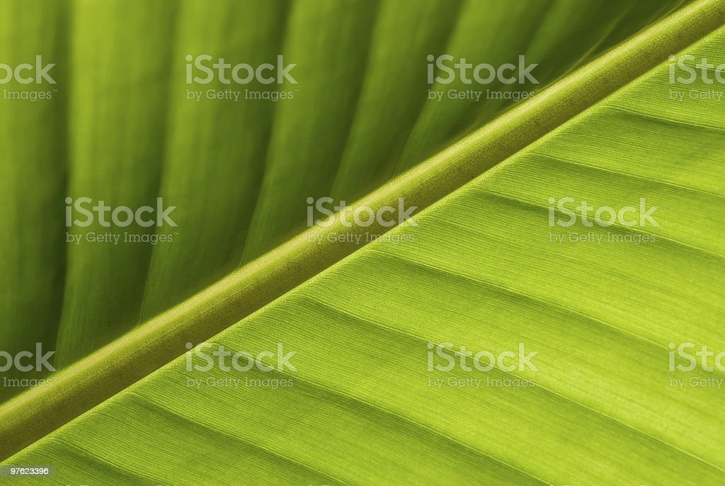 Green Leaf Structure close-up royalty-free stock photo