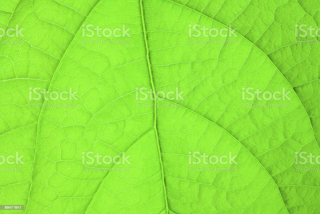 green leaf structure royalty-free stock photo