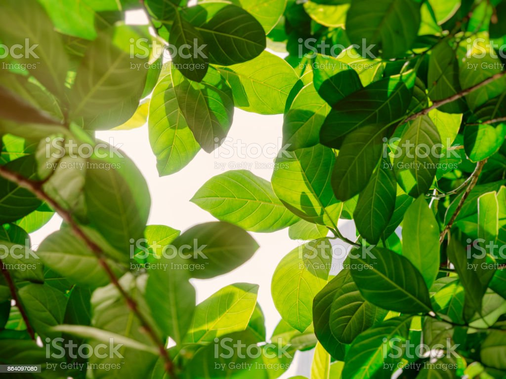 Green Leaf sunlight Park outdoor Nature background royalty-free stock photo