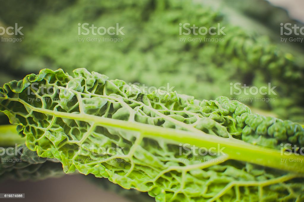 Green leaf surface stock photo