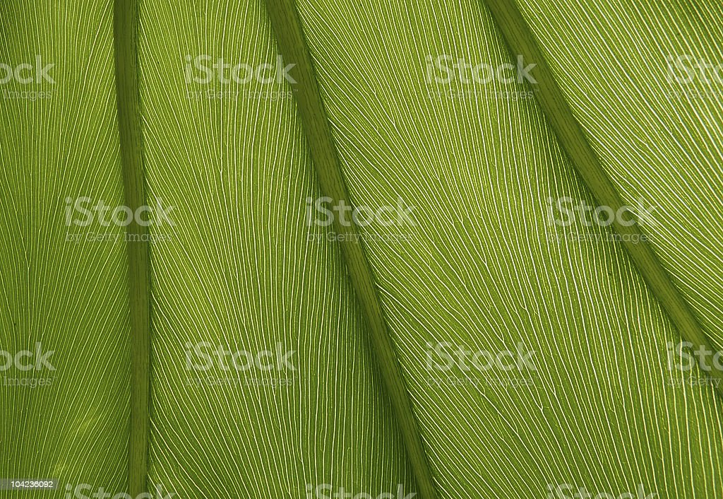 Green leaf texture close-up royalty-free stock photo