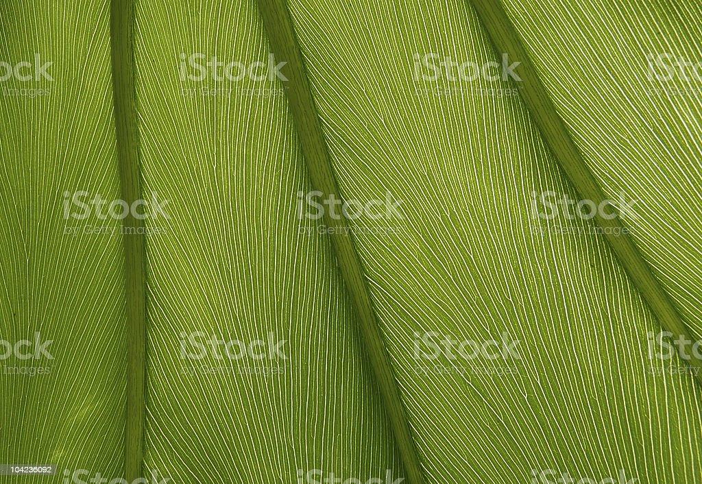 Green leaf textura primer plano - foto de stock