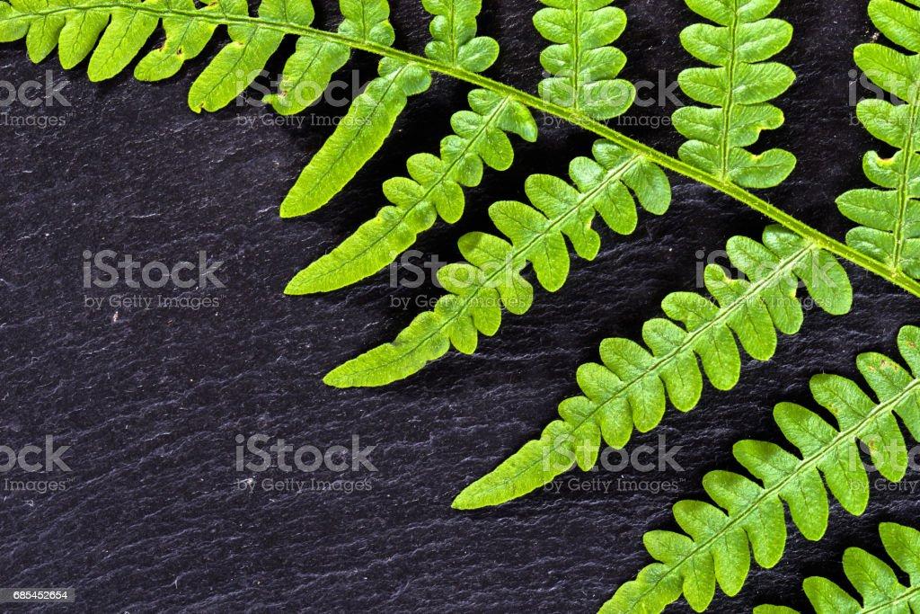 Green leaf texture, fern on black background, sacred geometry in nature, fractal natural pattern foto de stock royalty-free