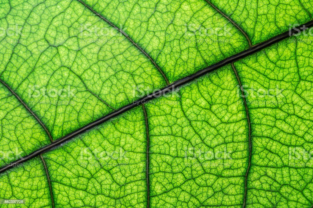 Green leaf texture, macro picture stock photo