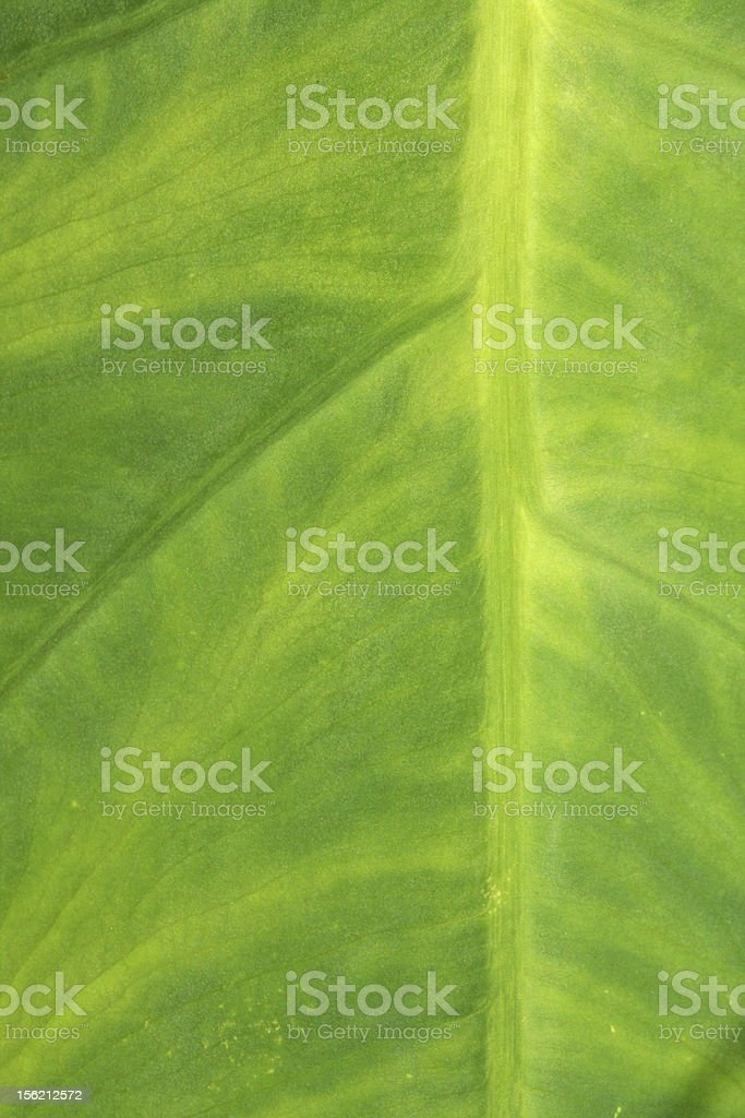 Green Leaf Texture Varied green colors of a leaf texture. Green Color Stock Photo