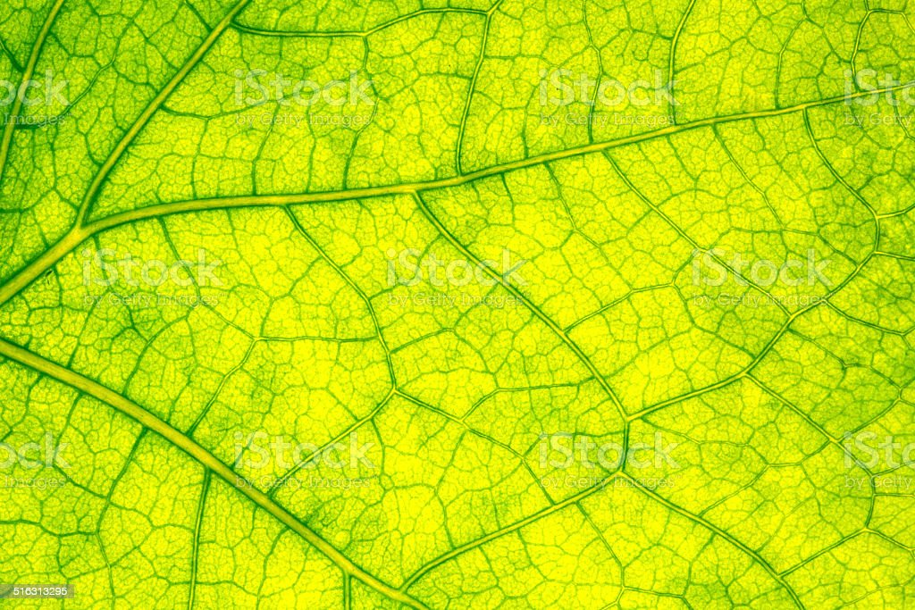 Green Leaf Texture. stock photo