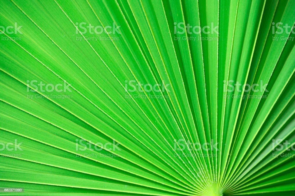 green leaf texture royalty free stockfoto
