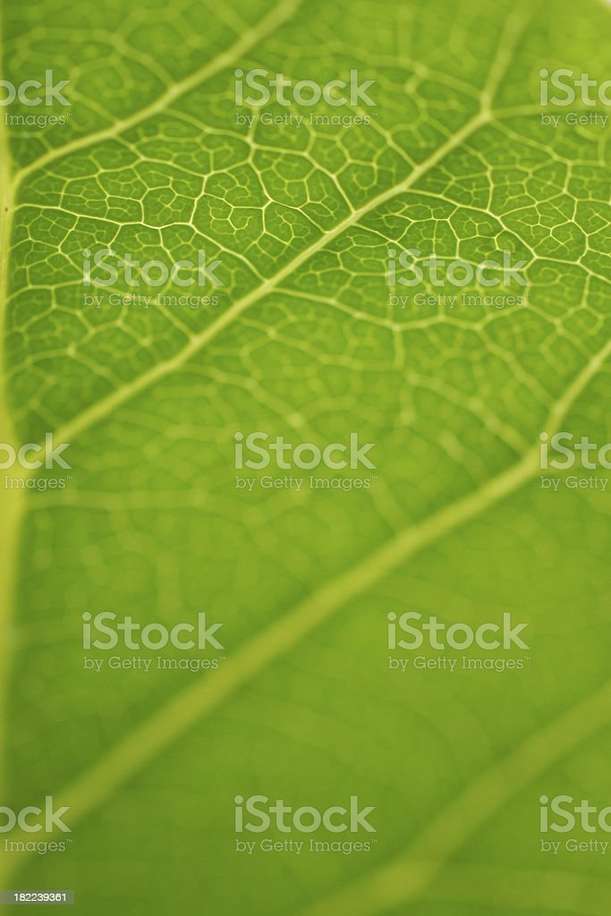 Green leaf textured background royalty-free stock photo