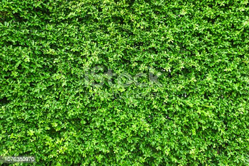 istock Green leaf wall background. 1076380970