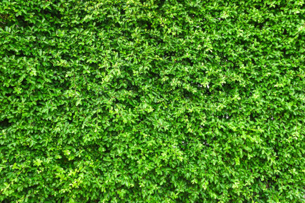 green leaf wall background. - lush foliage stock pictures, royalty-free photos & images