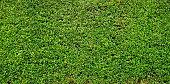 Leaf, Plant, Fence, Bush, Hedge