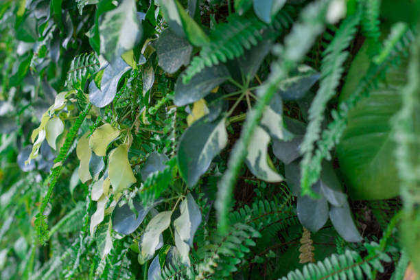 Green leaf wall,green leaves background stock photo
