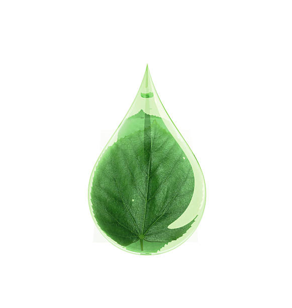 Green Leaf Water Drop Green leaf in a drop of water. chlorophyll stock pictures, royalty-free photos & images