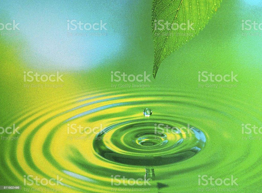 Grünes Blatt mit Wasser Tropfen – Foto
