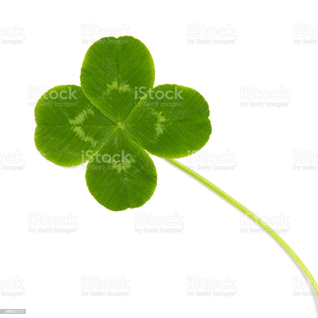 green leaf wild clover stock photo