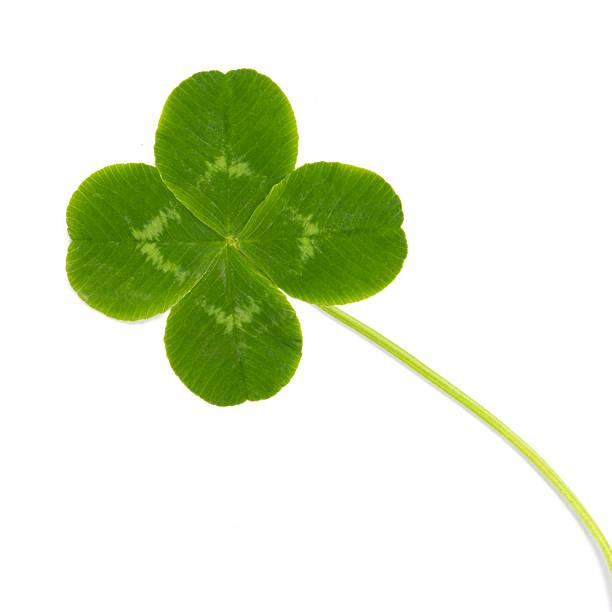 folhas de trevo verde selvagem - boa sorte - fotografias e filmes do acervo