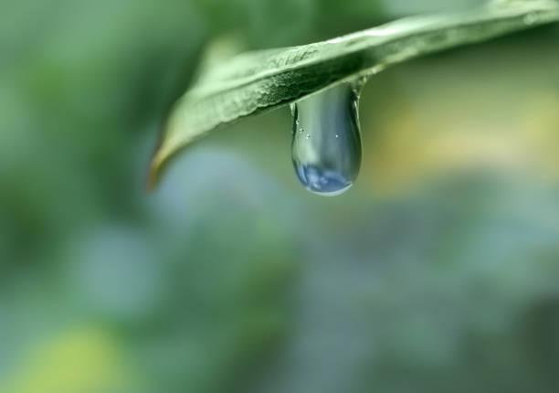 Grünes Blatt mit einem Tropfen Wasser auf verschwommenem Hintergrund. Dürre/Wasserknappheit Konzept. Wasserknappheit ist der Mangel an ausreichenden verfügbaren Wasserressourcen, um den Anforderungen des Wasserverbrauchs gerecht zu werden. – Foto