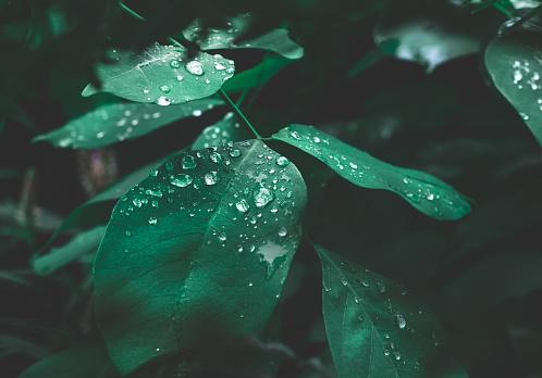 어두운 자연 배경에서이 슬 리프 그린 0명에 대한 스톡 사진 및 기타 이미지