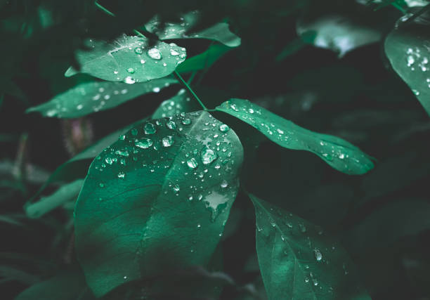 green leaf with dew on dark nature background. - forest imagens e fotografias de stock