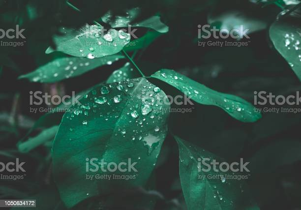 Photo of Green leaf with dew on dark nature background.
