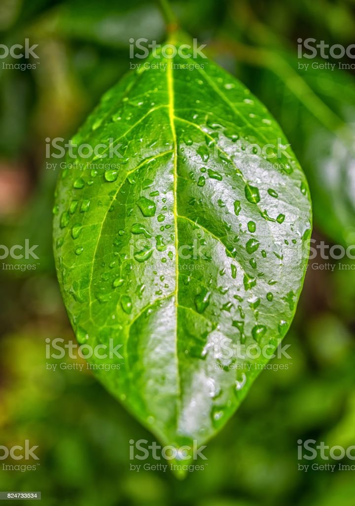 Green leaf with droplets stock photo
