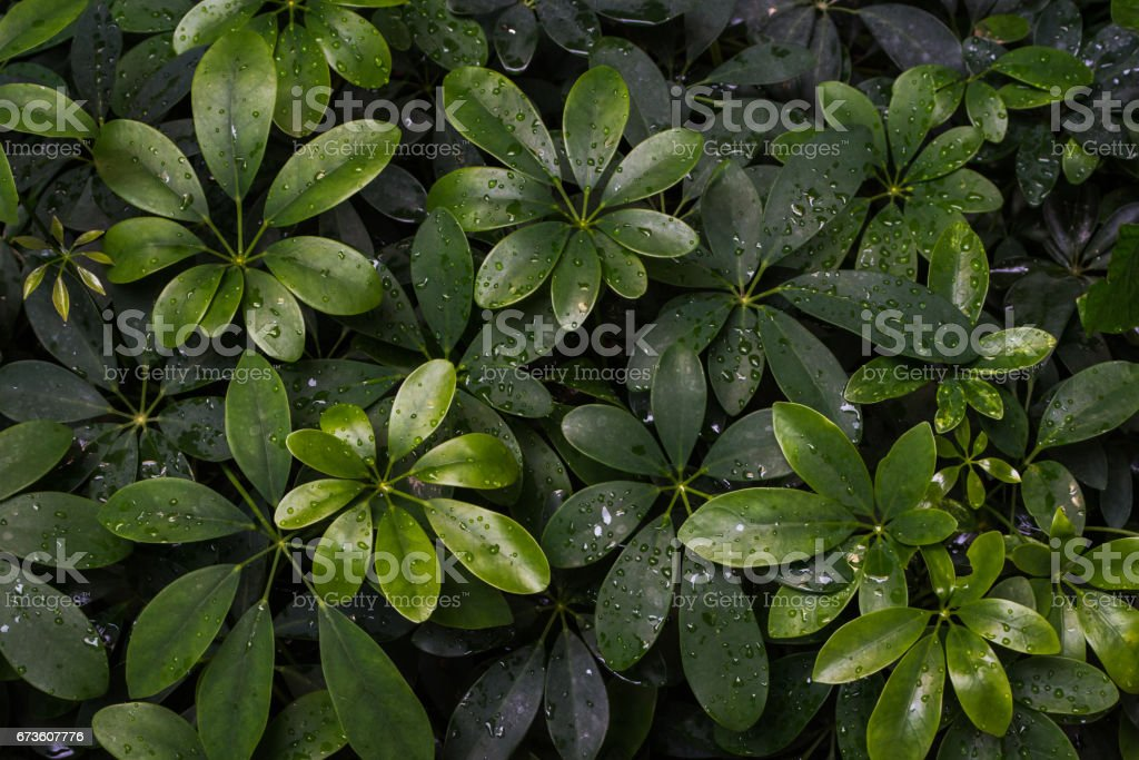 Green leaf with droplets texture background. - foto stock