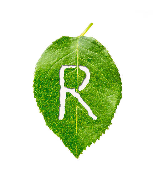 green leaf with R stock photo