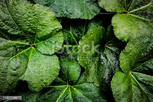 666980960 istock photo Green leaf with water drop on black background 1132228972