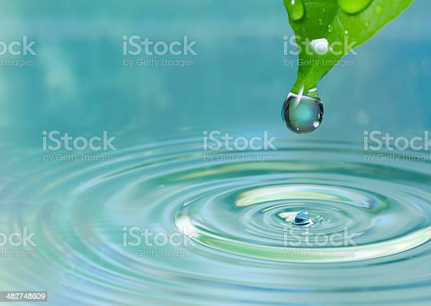 Photo of Green leaf with water drop