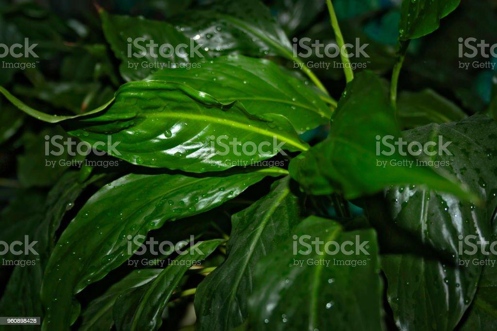Grünes Blatt mit Wassertropfen, Makro - Lizenzfrei Baum Stock-Foto