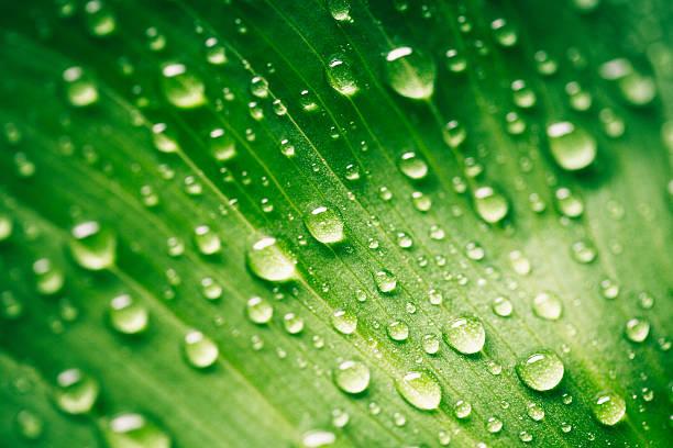 green leaf with waterdrops - dauw stockfoto's en -beelden