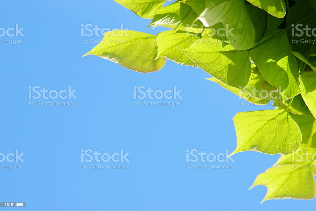 Green leafs and blue sky frame
