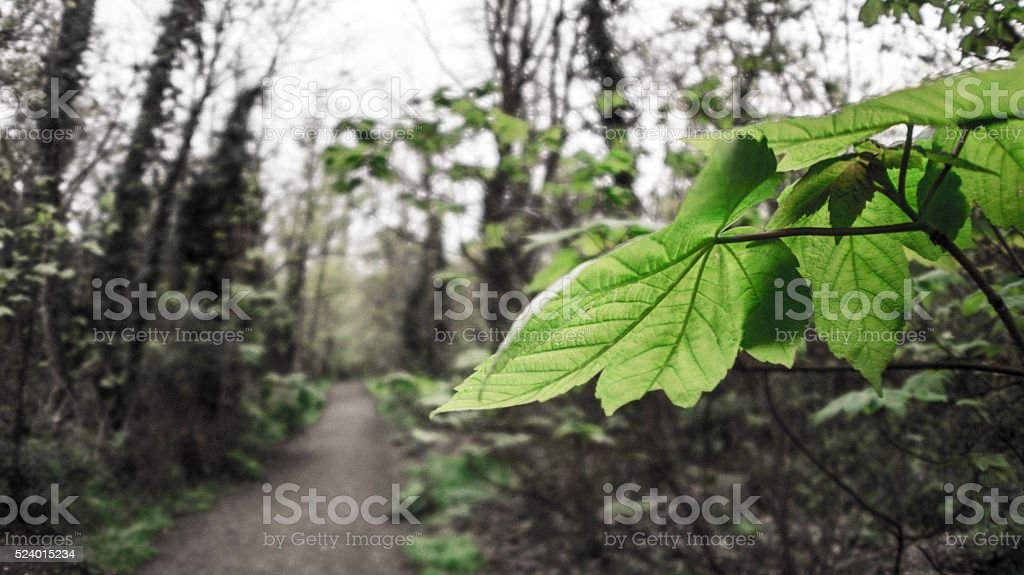 Green leafs and path. stock photo