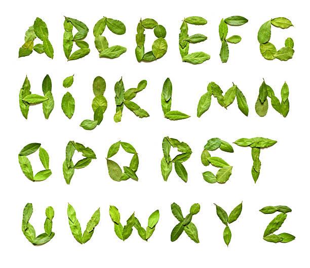 green leafs from a to z - weihnachten 個照片及圖片檔