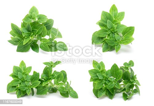 Green Leafs of fresh young Basil isolated on white Background, Basil Herb Leaves isolated, top View