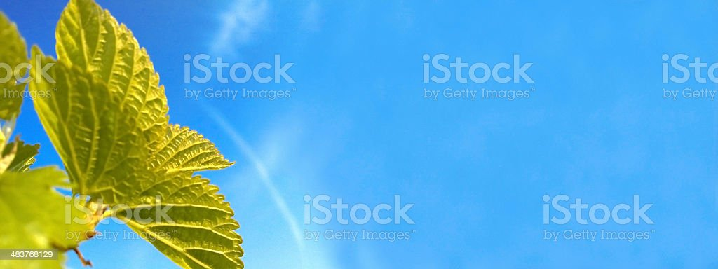 Green leafs over sky royalty-free stock photo