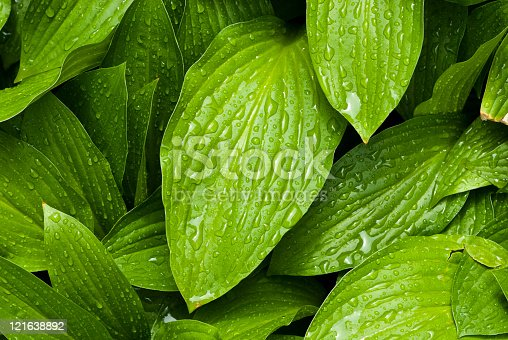 istock Green leafs with water drops 121638892